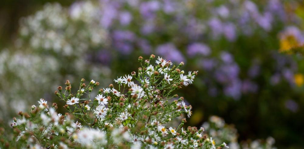 3 dingen die je moet weten voordat je planten in bakken gaat planten