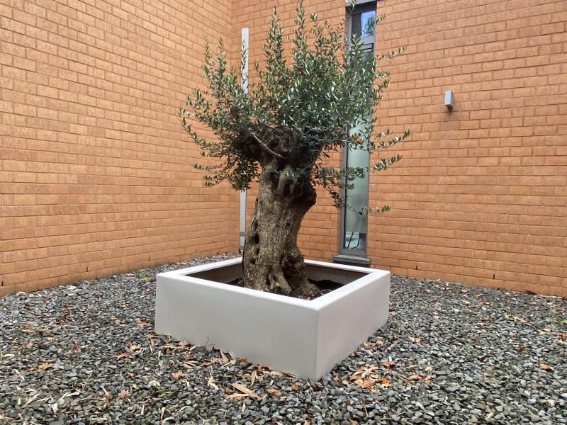 Plantenbak buiten boom zonder bodem