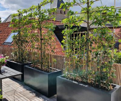 Bekijk de grote rechthoekige plantenbakken