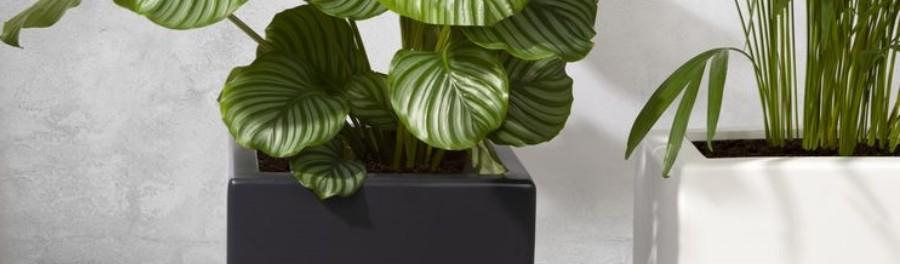 Meld je aan als exclusieve Green-Lab Club Member en ontvang je eerste korting bij Polyesterplantenbakken.nl