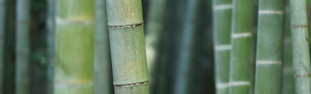 Plantenbak buiten bamboe