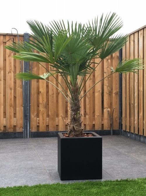 Polyester plantenbak 40x40x40 cm.