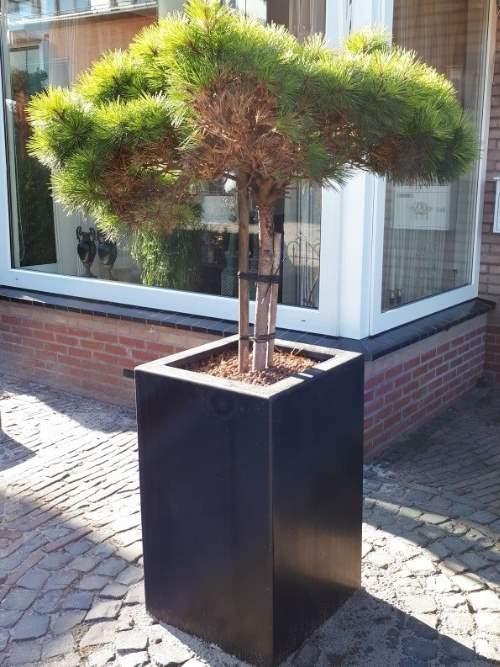 Polyester plantenbak 50x50x80 cm in ral kleur 9005 (zwart)
