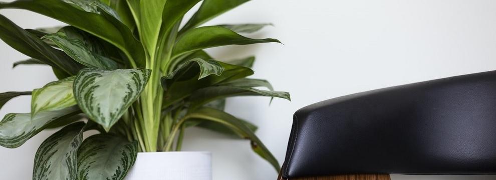 plantenbak_kantoor