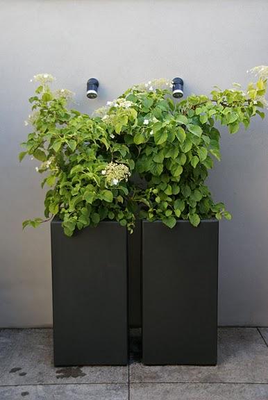 Plastic plantenbakken in het zwart