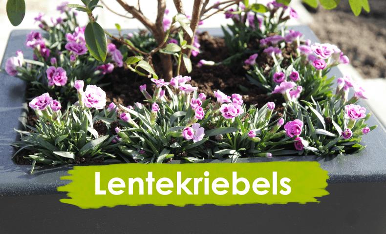 Vorstbestendige polyester plantenbakken zorgen ook in het najaar een mooi gezicht in de tuin