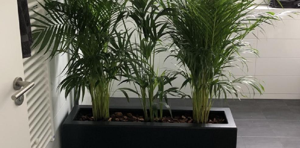 Enjoyplanters plantenbak voor binnen in de badkamer